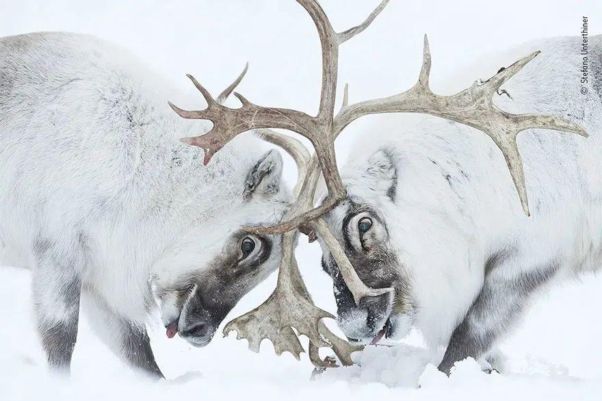2021年度野生动物摄影作品,有的让人震撼,有的让人心碎
